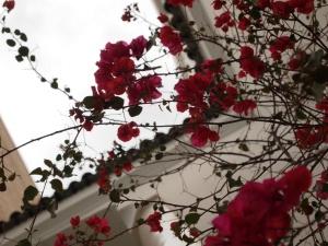 Riad Flowers